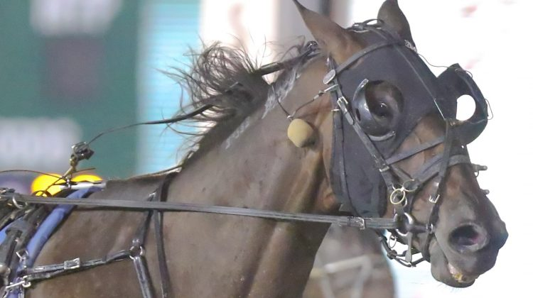 Microchipping coming to Standardbred racing