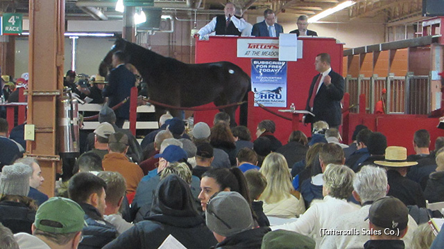 Several Indiana horses sell at Tattersalls