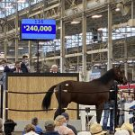 Record Sales Price tops first day of Hoosier Classic Yearling Sale