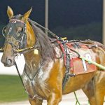 Dozen Indiana sired horses featured in Breeders Crown Eliminations